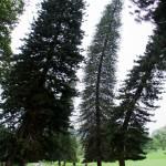 Giardini di Peradenya